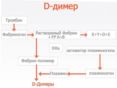 Д-димер при беременности что показывает
