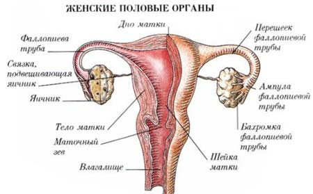 При беременности тонус в матке