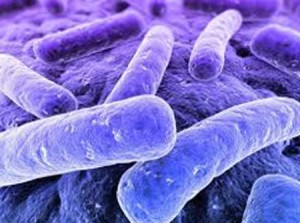влияние бактерии