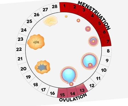 21 день цикла что происходит при беременности