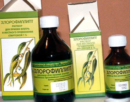 Ингаляции хлорофиллиптом при беременности