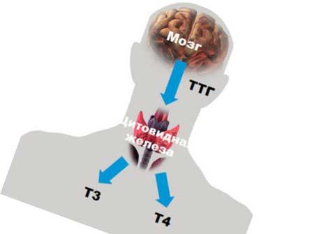 от мозга