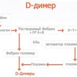 Анализ Д-Димер при беременности